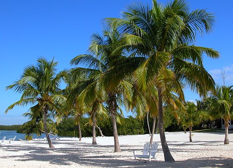 10-most-beautiful-caribbean-style-beaches-in-florida