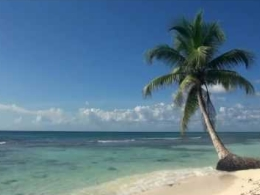 Relaxing Video of A Tropical Beach with Blue Sky White Sand and Palm Tree